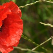 Poppy and Bee-be828df059c2f791c7b268c3b8e29d7f.jpg